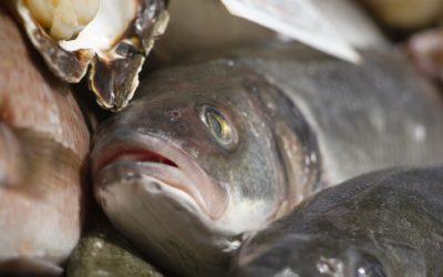 Sagre di pesce