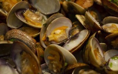Scopri il pesce più buono dell'Emilia Romagna